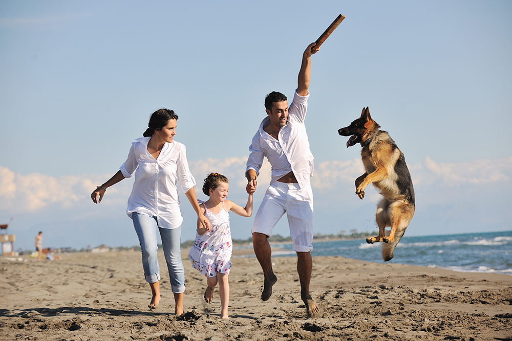 Essence of Joy, family playing on beach with dog.