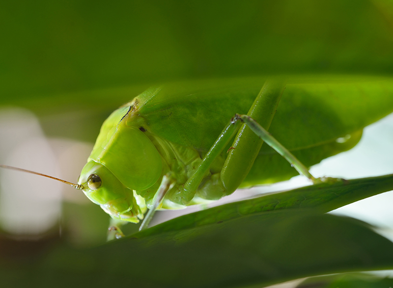 Grasshopper displays God's creativity.